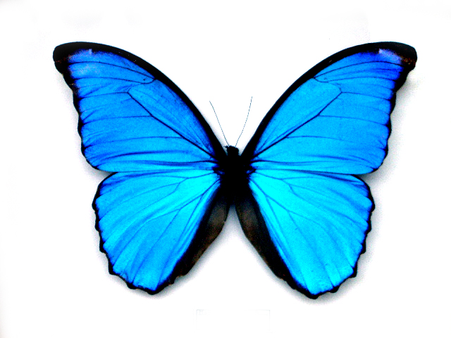 The Vaginal Massage Playbook: Part Six / The Butterfly Spot And Beyond